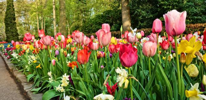 Biltmore Blooms In Asheville   Gardens To Inspire