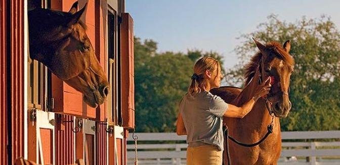 Beaufort County Real Estate Oldfield Equestrian Center