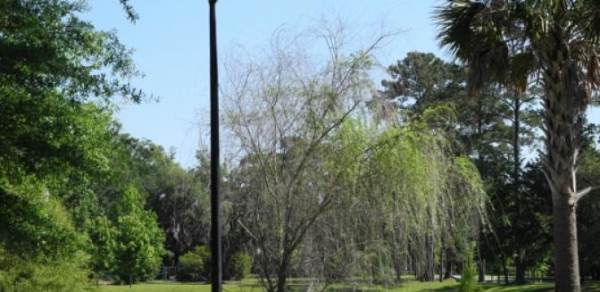 Coosaw Point SC Community Parks