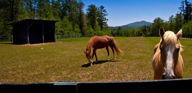 Highlands Cashiers Preserve At Rock Creek Equestrian Paddock