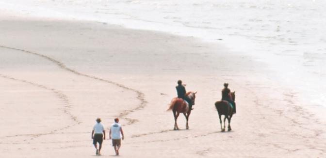 Living In Charleston Seabrook Island Beach Horseback Riding