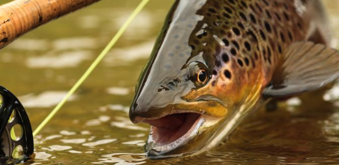 Asheville nc news trout fishing hot spots in north carolina for Fishing spots in nc