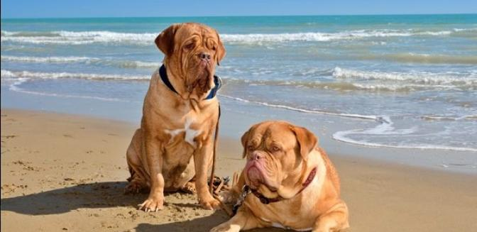 Palm Coast Homes Pet Friendly Beaches
