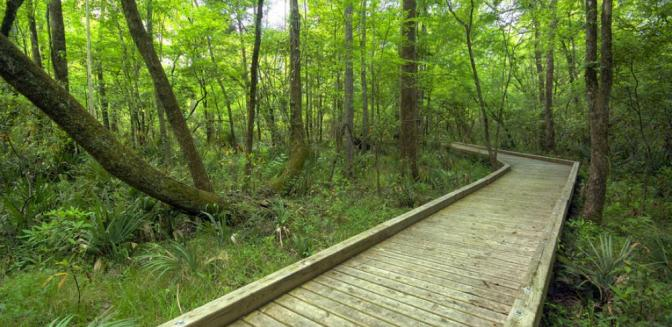 Palmetto Creek Of The Carolinas NC Hiking Trails