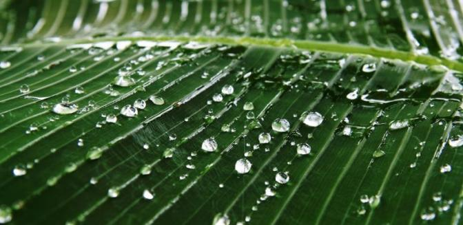 Waterdrop Green Leaf