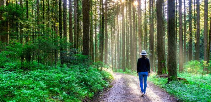 Forest bathing in Asheville